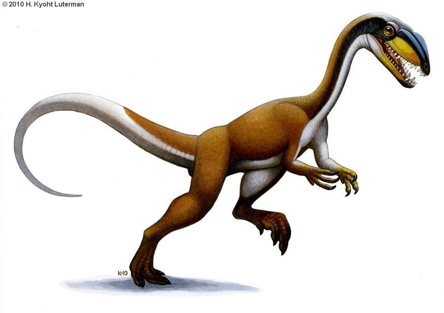 Megapnosaurus
