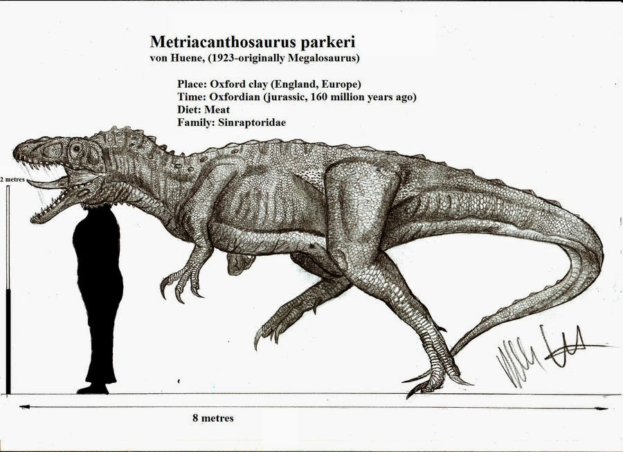 Metriacanthosaurus
