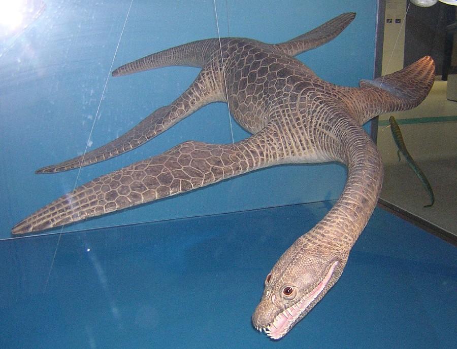 Meyerasaurus