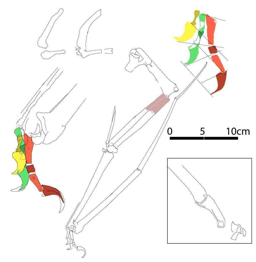Microtuban