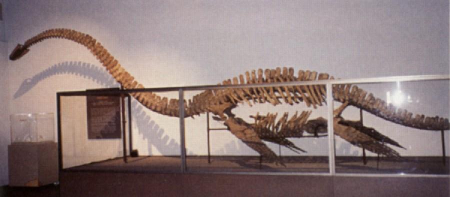 Morenosaurus