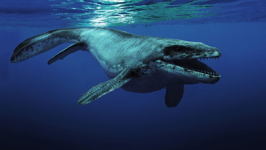 Mosasaurus Pictures & Facts - The Dinosaur Database