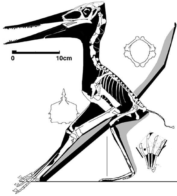Muzquizopteryx