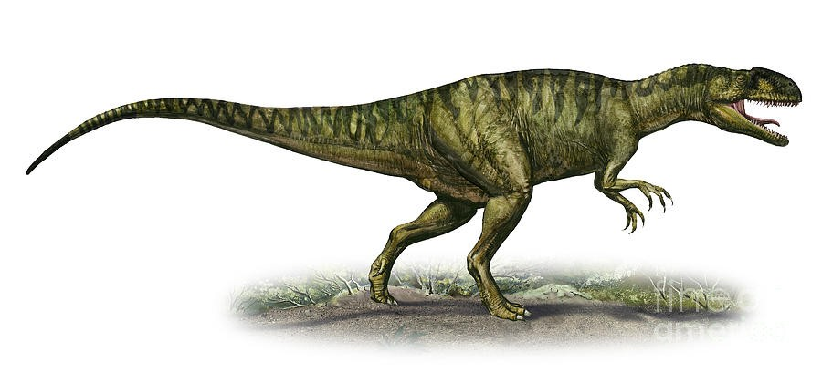 neovenator pictures amp facts the dinosaur database