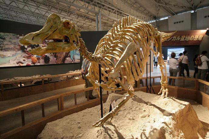 Nipponosaurus