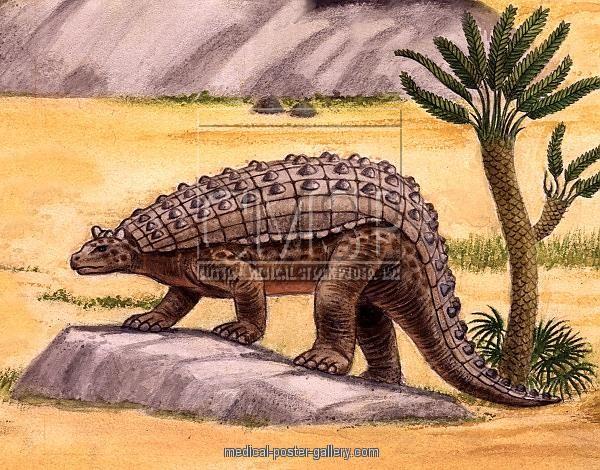 ... : www.medical-poster-gallery.com/nodosaurus-dinosaur-illustration