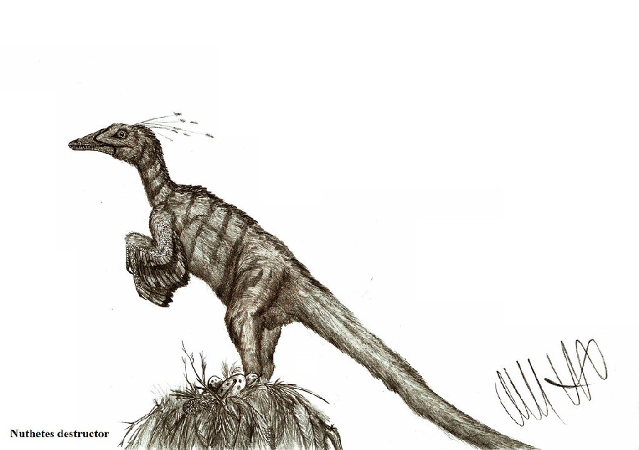 http://images.dinosaurpictures.org/nuthetes_destructor_by_teratophoneus-d62u82q_bc7e.jpg