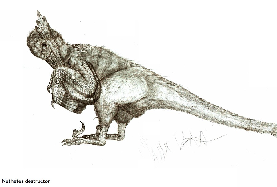 http://images.dinosaurpictures.org/nuthetes_destructor_by_teratophoneus-d6ld9k9_1b8f.jpg