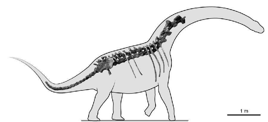 Overosaurus
