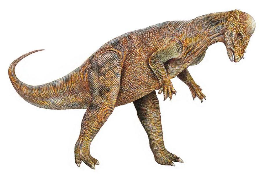 Ayay co uk background dinosaurs herbivore pachycephalosaurus head