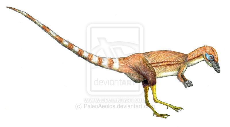 http://images.dinosaurpictures.org/paleo_colours__sinosauropteryx_by_paleoaeolos-d5zhxay_147f.jpg Sinosauropteryx