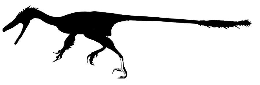 Pamparaptor