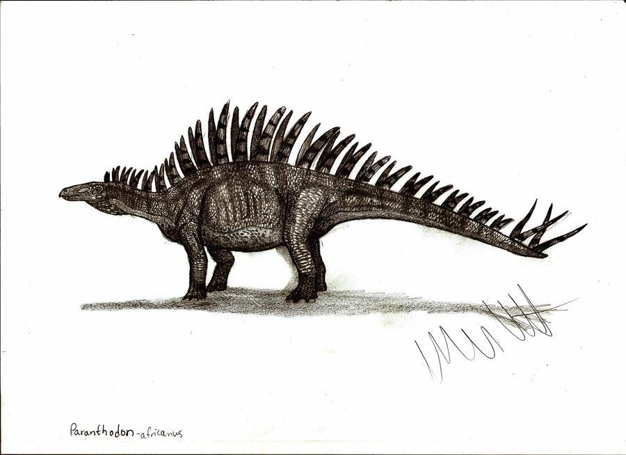 Paranthodon