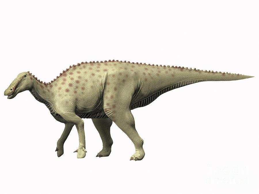 Qantassaurus  Dinosaur Names   YouTube
