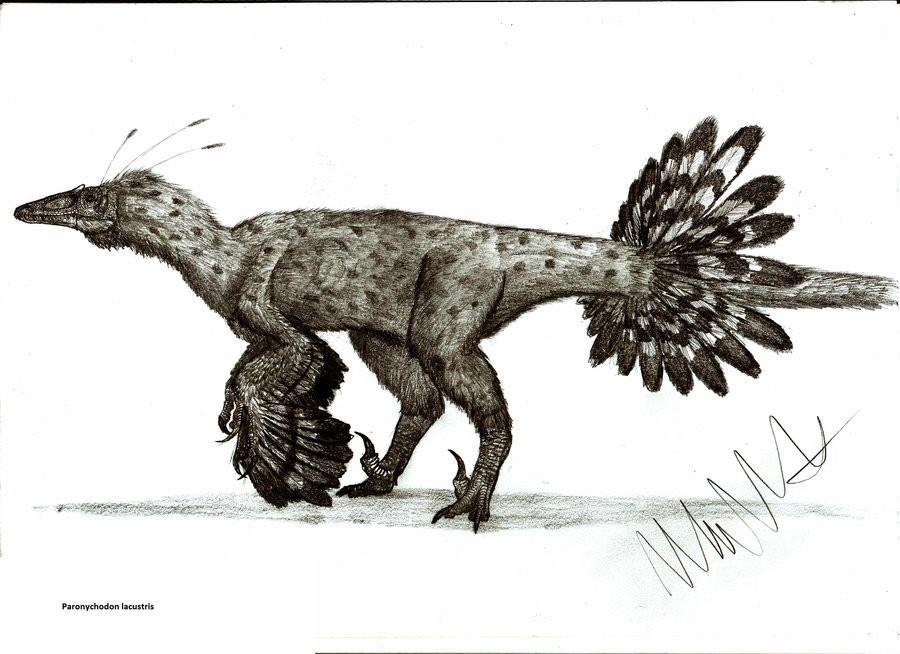 Paronychodon