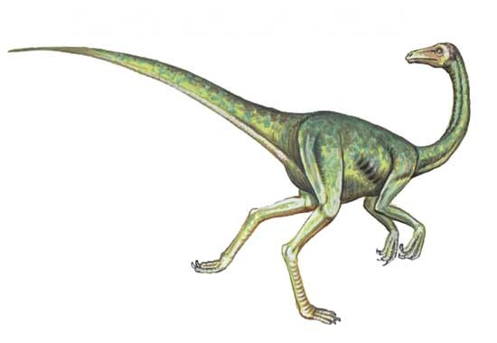 Struthiomimus Pictures Amp Facts The Dinosaur Database