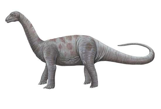 Bellusaurus