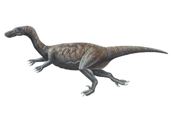 Archaeornithoides
