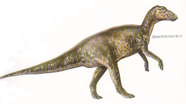 Edmontosaurus Pictures Amp Facts The Dinosaur Database