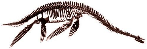 Plesiopterys