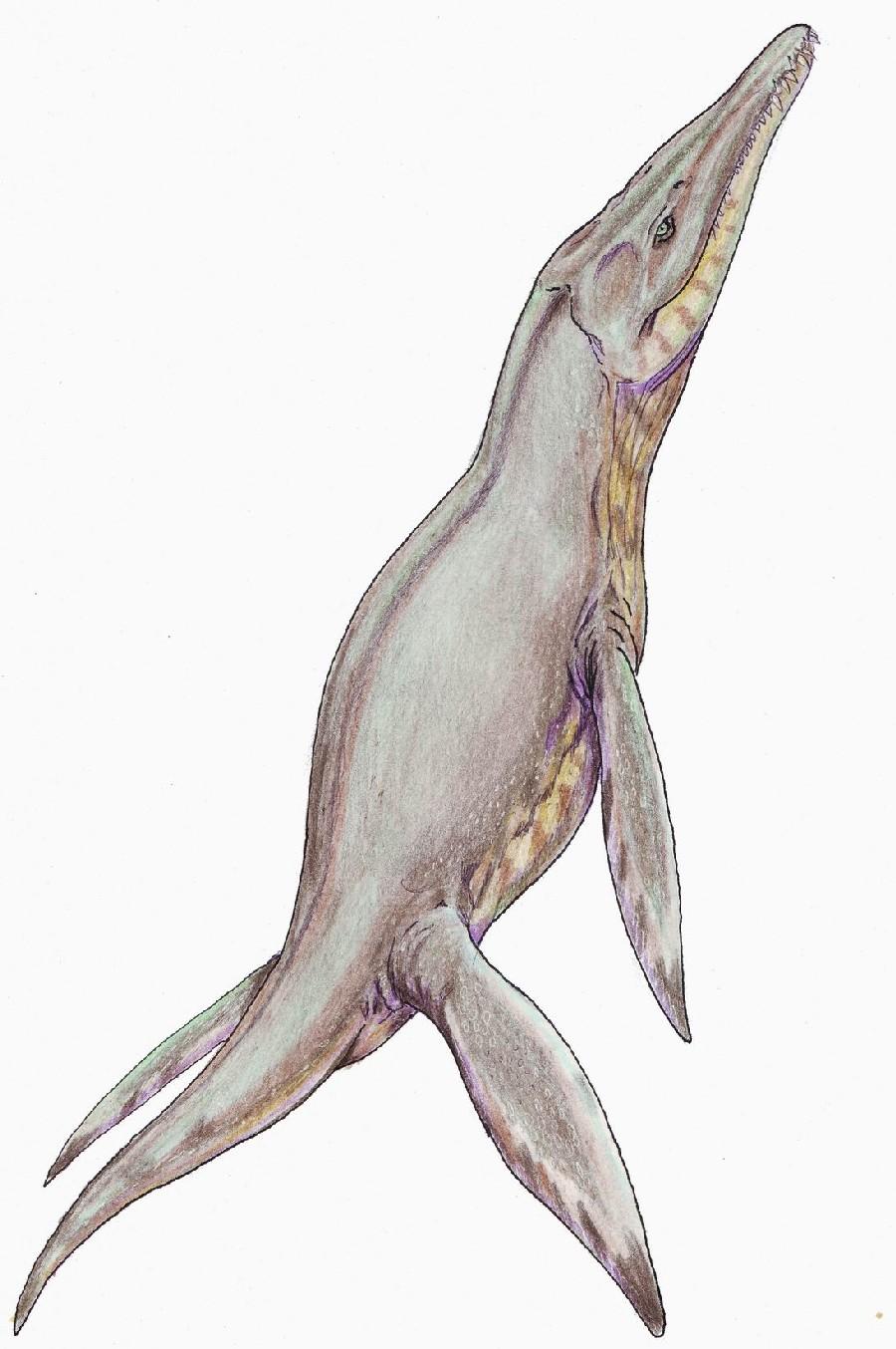 pliosaurus pictures u0026 facts the dinosaur database