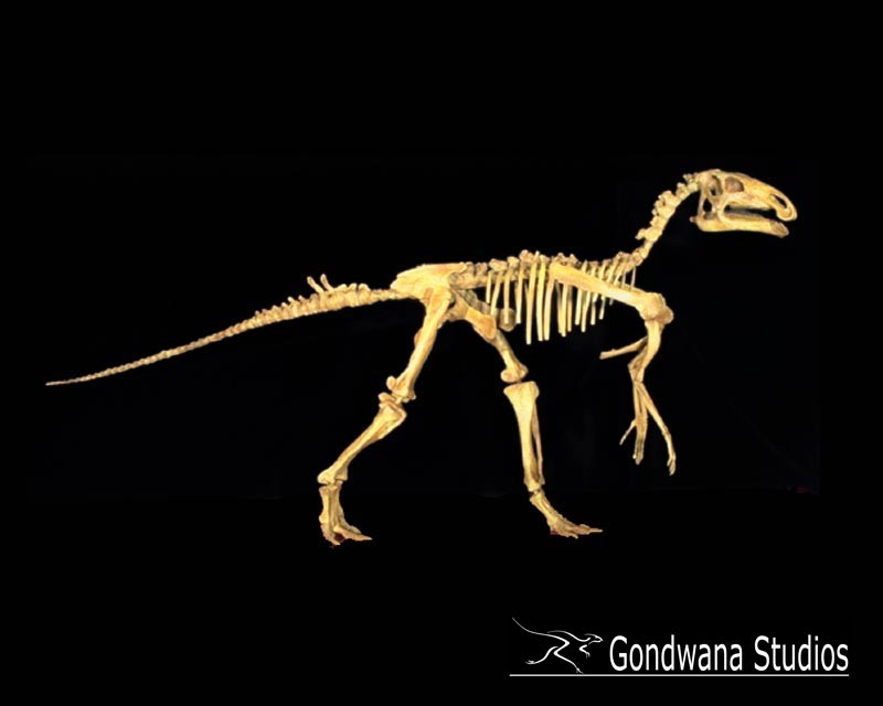 Probactrosaurus