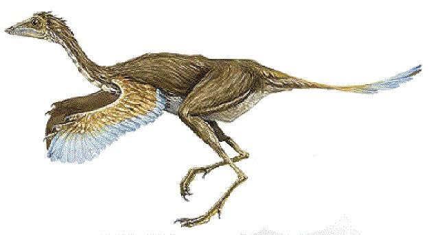 Protarchaeopteryx
