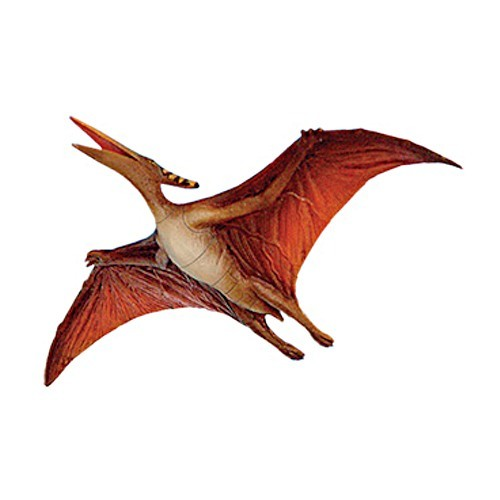 pteranodon pictures facts the dinosaur database