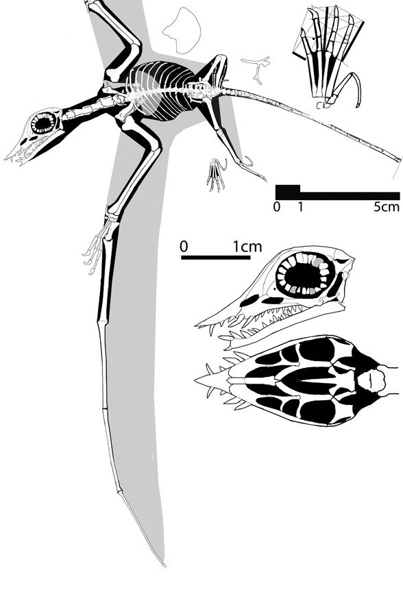 Qinglongopterus