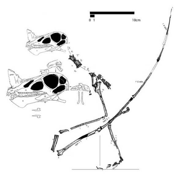 Raeticodactylus
