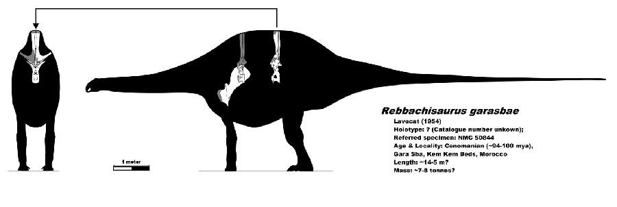 Rebbachisaurus