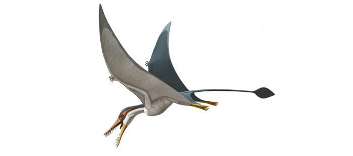 Resultado de imagen de rhamphorhynchus