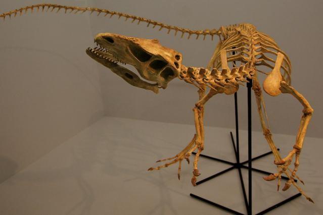 Santanaraptor