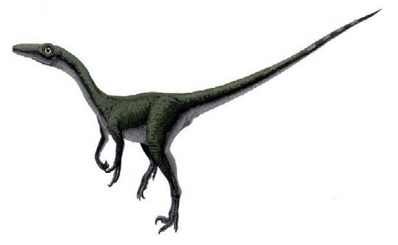 Saurornithoides
