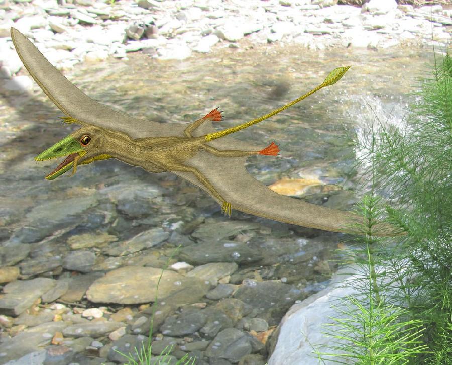 Scaphognathus