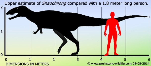 shaochilong pictures amp facts the dinosaur database