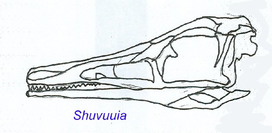 Shuvuuia
