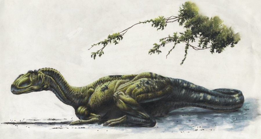 Siamotyrannus Pictures & Facts - The Dinosaur Database