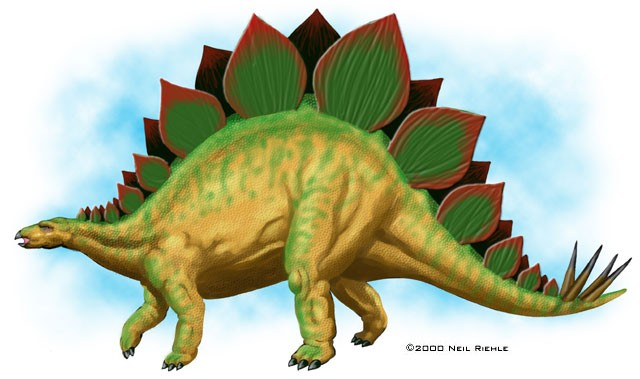 stegosaurus pictures facts the dinosaur database