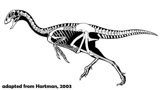 Thecocoelurus