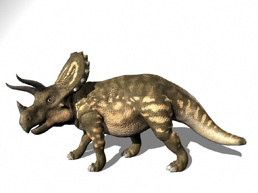 triceratops pictures facts the dinosaur database
