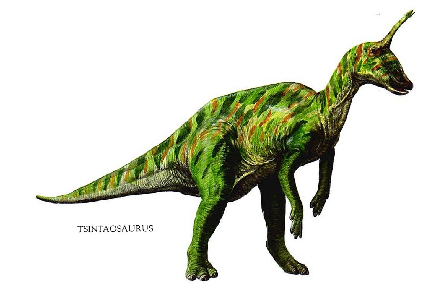 Source ayay co uk background dinosaurs herbivore tsintaosaurus