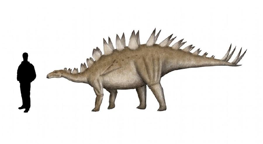 Tuojiangosaurus