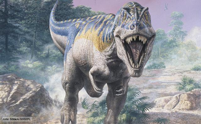 Tyrannosaurus pictures facts the dinosaur database source bbcnaturelifetyrannosaurus altavistaventures Gallery