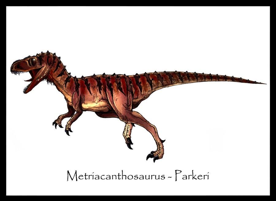 Metriacanthosaurus Metriacanthosaurus Pic...