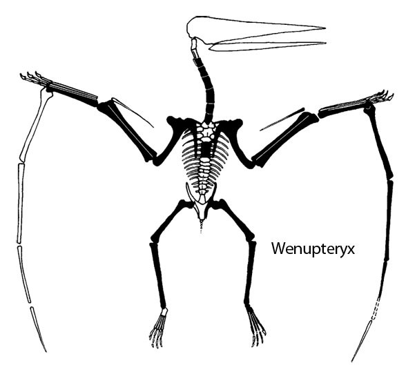 Wenupteryx
