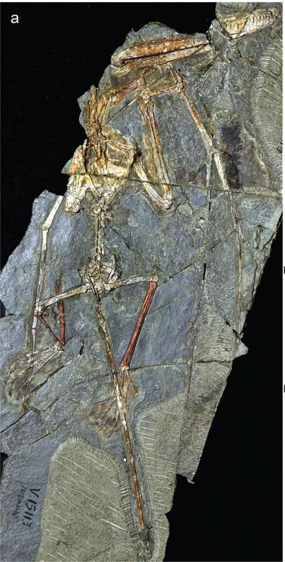Wukongopterus