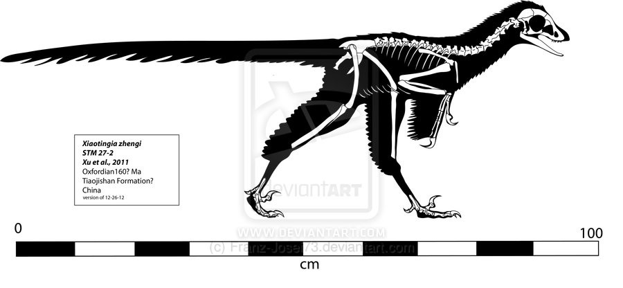 Xiaotingia Pictures & Facts - The Dinosaur Database