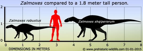 Zalmoxes