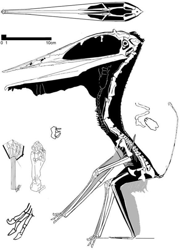 Zhejiangopterus